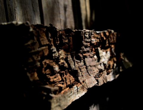 Wood rot decay